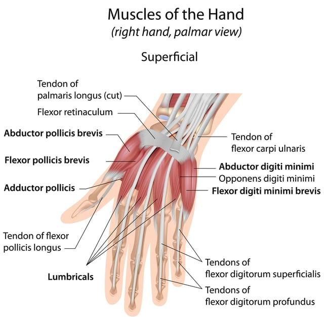hand-diagram-trigger-finger.jpg
