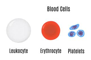 what are platelets and how do they woork