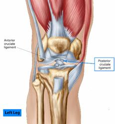 storyblocks-anatomy-of-human-knee-joint_H60CxB5AZ (1)