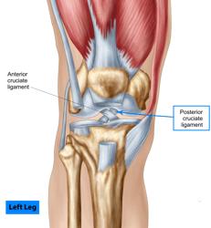 storyblocks-anatomy-of-human-knee-joint_H60CxB5AZ