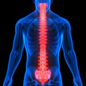 storyblocks-human-skeleton-system-vertebral-anatomy_HtkdYnogN